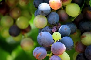 wine_0001_grapes